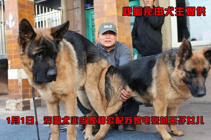 动物犬图片大全大图
